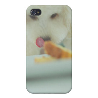 Close-up of a miniature poodle eating food iPhone 4/4S covers