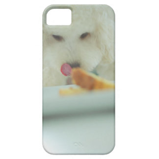 Close-up of a miniature poodle eating food iPhone 5 case