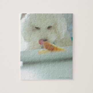Close-up of a miniature poodle eating food jigsaw puzzle