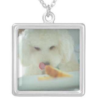 Close-up of a miniature poodle eating food silver plated necklace