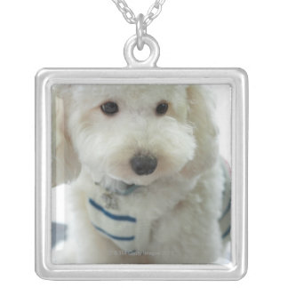 Close-up of a miniature poodle silver plated necklace