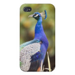 Close-up of a peacock iPhone 4 case