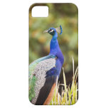 Close-up of a peacock iPhone 5 cases