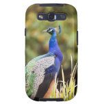 Close-up of a peacock samsung galaxy s3 cases