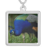 Close-up of a peacock square pendant necklace