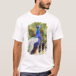 Close-up of a peacock T-Shirt