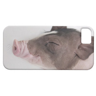 Close-up of a piglet's head, smiling barely there iPhone 5 case