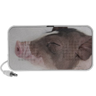 Close-up of a piglet's head, smiling travel speaker