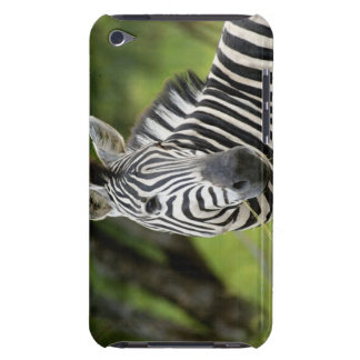 Close-up of a Plains zebra (Equus burchellii) in Barely There iPod Cases