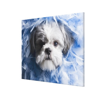 Close-up of a puppy covered with feathers canvas print