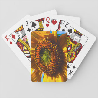 Close-up of a sunflower playing cards