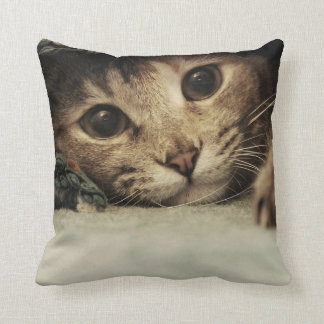 Close up of a tabby cats eyes cushion