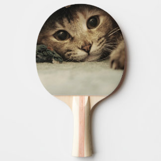 Close up of a tabby cats eyes ping pong paddle