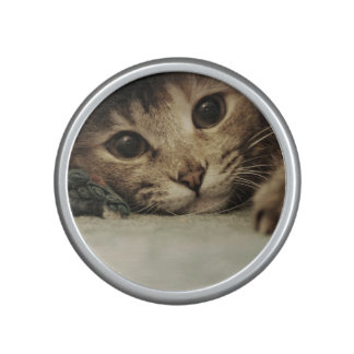 Close up of a tabby cats eyes speaker