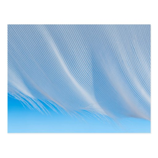 Close-Up Of A White Feather Post Card