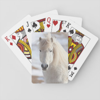 Close up of a White Icelandic Horse Playing Cards