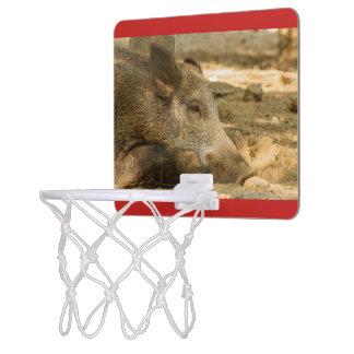 close-up of a wild boar on  Mini Basketball Goal Mini Basketball Hoop