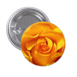 Close Up of a Yellow Rose Button
