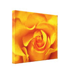 Close Up of a Yellow Rose Canvas Print