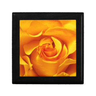 Close Up of a Yellow Rose Gift Box
