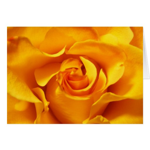 Close Up of a Yellow Rose Greeting Card