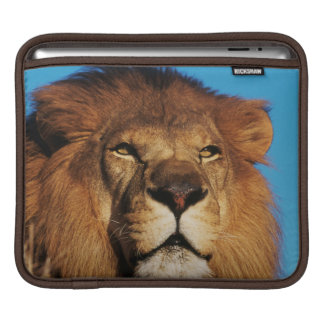 Close-up of African Lion iPad Sleeve