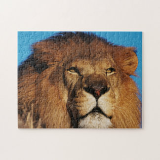 Close-up of African Lion Jigsaw Puzzle