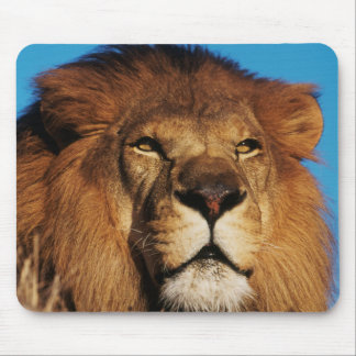 Close-up of African Lion Mouse Mat