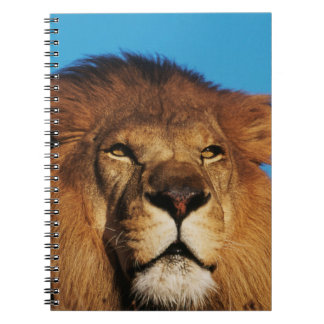 Close-up of African Lion Notebook