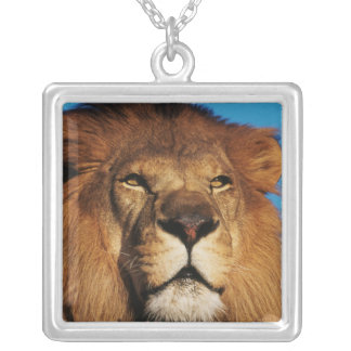 Close-up of African Lion Silver Plated Necklace