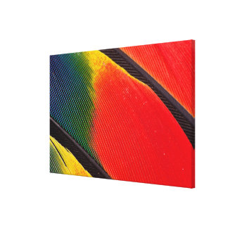 Close Up Of Amazon Parrot Feathers Canvas Print