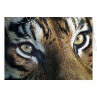 Close up of an adult male Sumatran Tiger Greeting Card