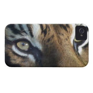 Close up of an adult male Sumatran Tiger iPhone 4 Case-Mate Case