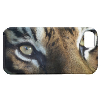 Close up of an adult male Sumatran Tiger iPhone 5 Covers