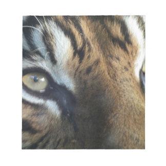 Close up of an adult male Sumatran Tiger Notepad