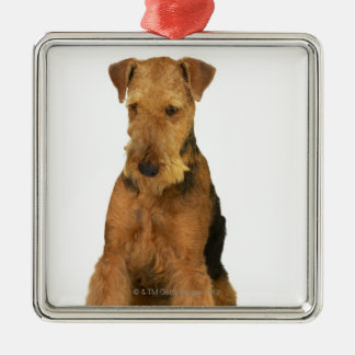 Close up of an airedale terrier christmas ornament
