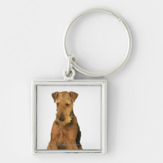 Close up of an airedale terrier key ring