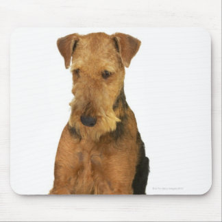 Close up of an airedale terrier mouse mat