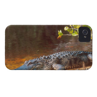 Close up of an american alligator at the J.N. iPhone 4 Case-Mate Cases