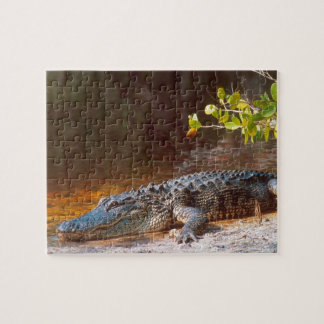 Close up of an american alligator at the J.N. Jigsaw Puzzle