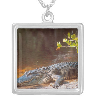 Close up of an american alligator at the J.N. Silver Plated Necklace