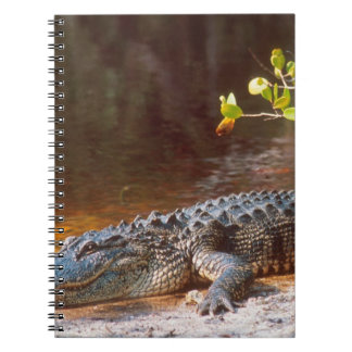 Close up of an american alligator at the J.N. Spiral Notebook