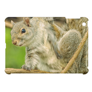 Close-up of an Eastern Gray Squirrel scratching iPad Mini Cover