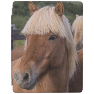 Close up of an Icelandic horse iPad Cover