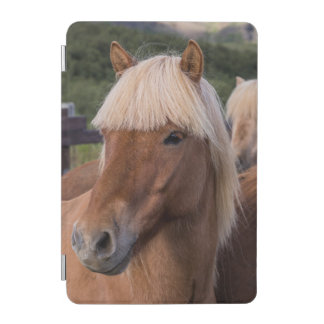 Close up of an Icelandic horse iPad Mini Cover