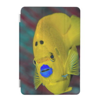 Close-up of Angelfish iPad Mini Cover