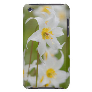 Close-up of avalanche lilies iPod touch case