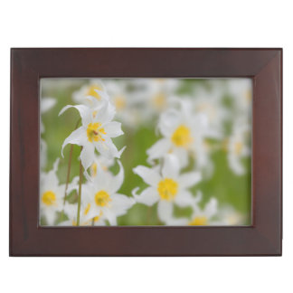 Close-up of avalanche lilies keepsake box