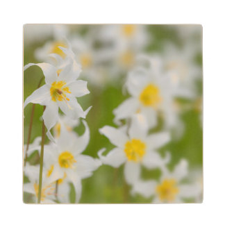 Close-up of avalanche lilies wood coaster
