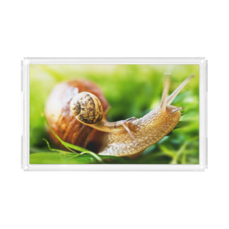 Close up of baby snail on adult snail acrylic tray